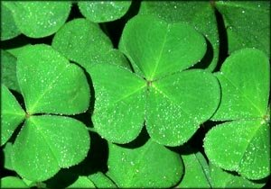 Lovely green clovers representing good times.