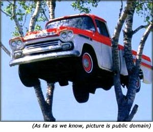 Quotes on car insurance: Funny picture of car high up in a tree.