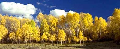 Colorado state nickname - Colourful Colorado - picture of trees