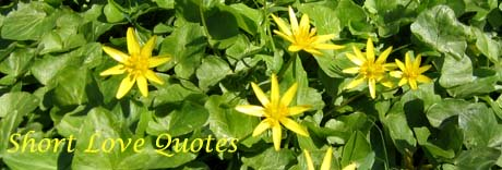 Short Love Quotes: picture of yelllow spring flowers.