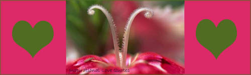 Inspirational love quotes - beautiful stamens of pink flower