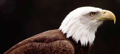 Mississippi nickname: The Eagle State - picture of eagle