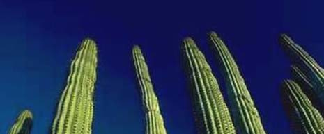 New Mexico nickname: The Cactus State - picture of cacti