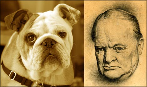 Churchill, the British Bulldog. Drawing of Churchill and photo of bulldog.
