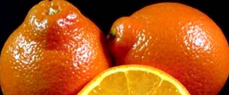 Florida nickname; The Orange State - picture of oranges