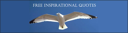 Picture of flying seagull in the blue sky