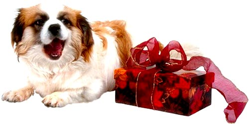 Funny picture of dog or puppy and red present.
