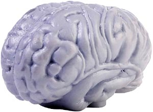Facts about the brain: Model of the human brain.