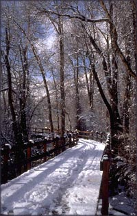 Snowy forest road and bridge in the sunshine - direction is always a choice.