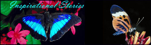 Inspirational stories and inspiring words: Blue, black and turquoise butterfly.