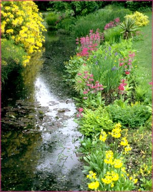 Little stream and yellow and purple flowers.
