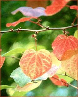 Inspirational life quotes: Photo of red and yellow leaves.