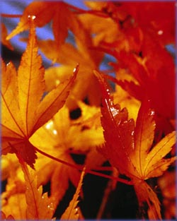 Inspirational life quotes: red leaves in autumn.