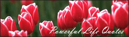 Life Quotes: Piture of many red tulips