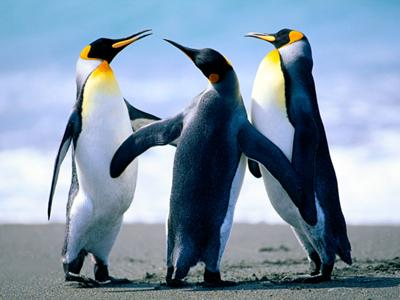 Just like these penguins.