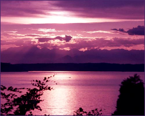 Purple sunset at the sea or by a lake.