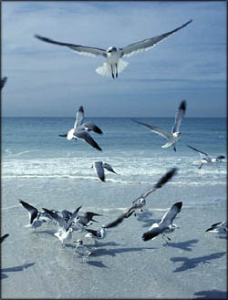 Personalized notebook with inspirational picture of seaguls by the sea.