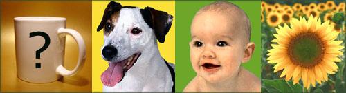 Personalized photo mugs: baby, dog and sunflower motifs on custom coffee mugs.