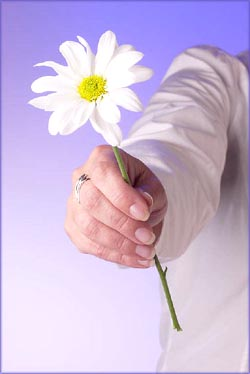Woman hand holding and giving a flower.