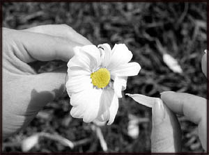 Sad love poems: Photo of woman pulling daisies.