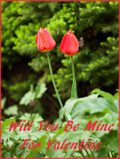 Modern Valentines Day cards in photo style: Two red tulips.