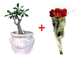 Valentines gift ideas: Combining a living plant and a bouquet of red Valentine Roses