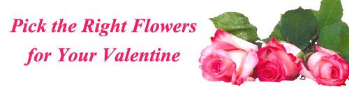 Three pink roses as Valentine flowers.