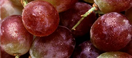 California, The Grape State - picture of grapes