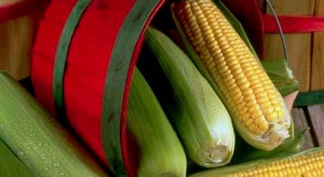 Iowa nickname: The Corn State - picture of corn