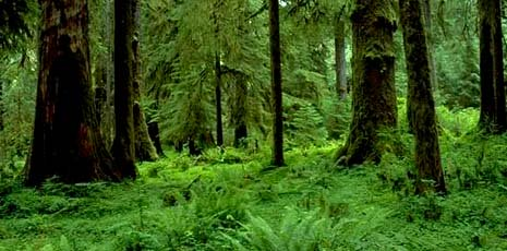 Washington nickname: The Evergreen State - picture of green forest