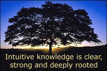Big tree in silhouette in the sunset: Intuitive knowledge is clear, strong and deeply rooted.