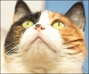 Funny Cat Sayings - multicolored cat closeup photo of face