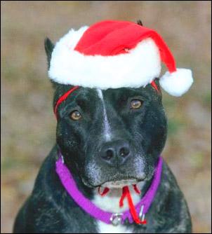Cute sad dog christmas hat