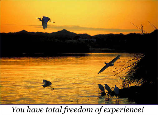You have total freedom of experience - beautiful orange yellow sunset lake birds