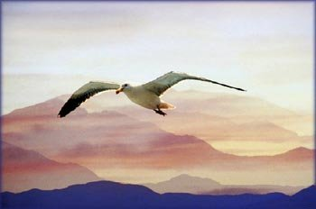 Living out dreams set you free. Flying seagull with beautiful mountains in the background.