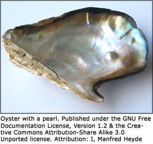 Photo of oyster with a little pearl inside.