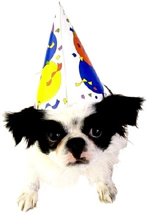 Party dog with Happy New Year hat.