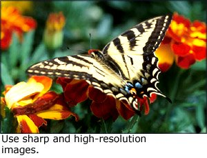 Photos for gifts: A photo of a butterfly on a flower.