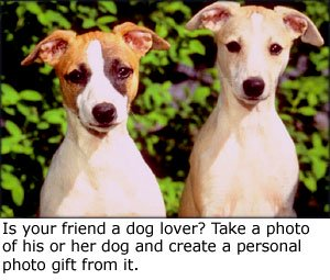 Cute photo gifts: Photo of two cute doges with bushes in the backgound.