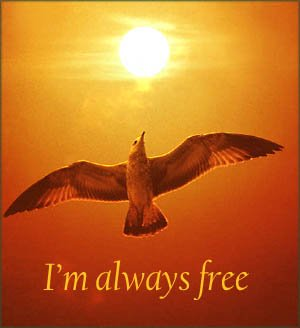 Personalized coffee mug for inspiration: seagull in the sunset.