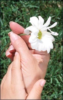 Woman hands holding a simple white flower - appreciation of small things.