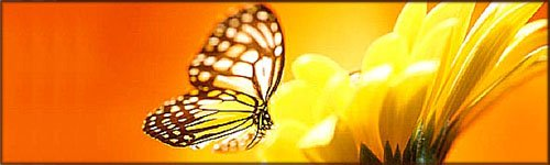 Positive Quotes: Yellow butterfly on yellow flower.
