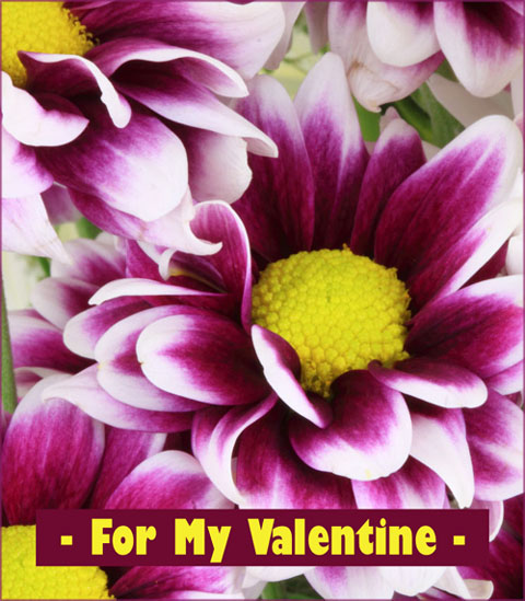 Free printable Valentine cards with photo of purple flowers and short Valentine greeting.