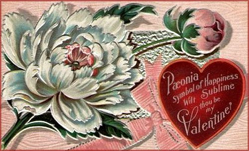 Drawing of big white flower and a red heart with Valentines Day poems.