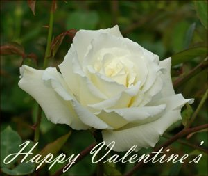 Prinable Valentines of modern photos: Photo of a white rose with a short Valentine greeting.