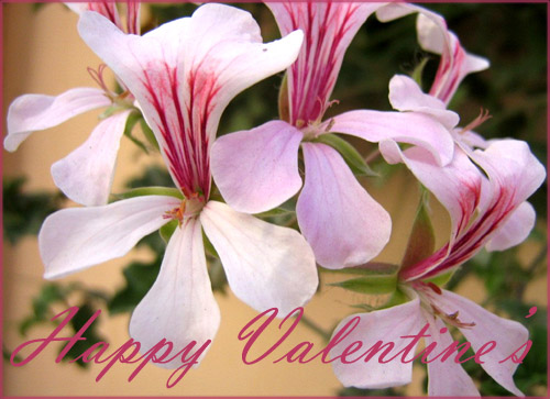 Free Valentines cards: Light pink flowers with sharp pink vertical lines.