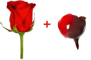 A red rose and a chocolate dipped cherry.