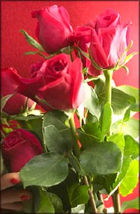Romantic gift ideas: A lovely bouquet of Valentine Roses.