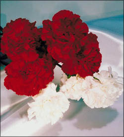 Romantic silk flowers, red and white roses.